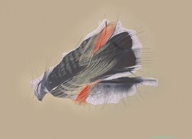 abstraction, collage papiers,plume de dindon sauvage, pastel sec, papiers déchirés, graphite et crayons de couleur, Sylvie Brodeur