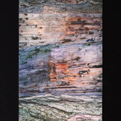 abstraction, collage de photos et d'écorces, et vieux bois, Hélène Paré