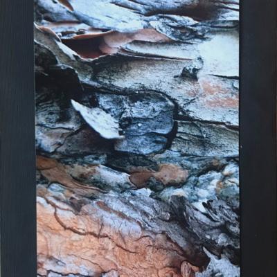 abstraction, alternance photo d'écorces diverses, Hélène Paré