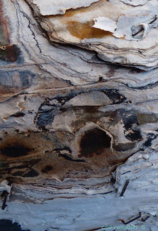 photo d'écorce, tons gris-sépia-bleu, grotte, Hélène Paré
