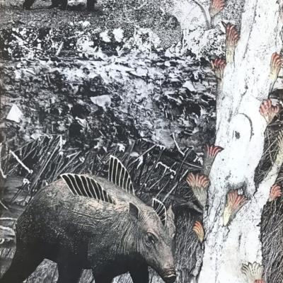 figuratif, deux animaux ailés imaginaire en mouvement dans un paywsage touffu, Hélène Paré